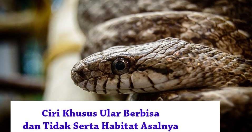 18 Ciri Khusus Ular Berbisa Dan Tidak Serta Habitat Asalnya Hewan Reptil