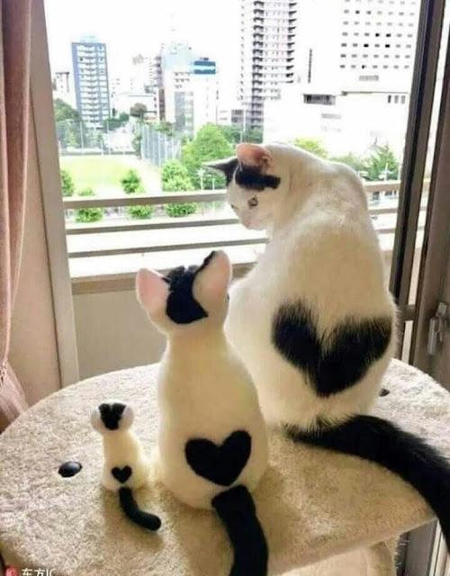 صور قطط,صور عن القطط,قطط مضحكة ,قطط جميلة ,قطط كيوت,قطط ذات فرو غريب