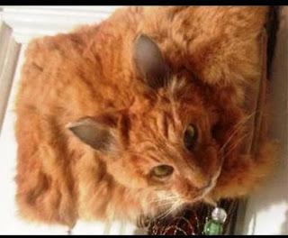 Ngeri! Tas Tangan Seharga Rp 14 Juta Ini Terbuat dari Kulit dan Kepala Kucing Asli