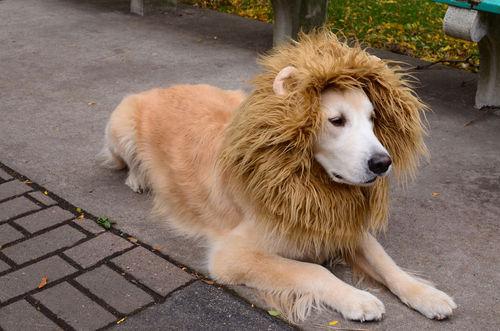Resultado de imagem para animais fantasiados de outros animais
