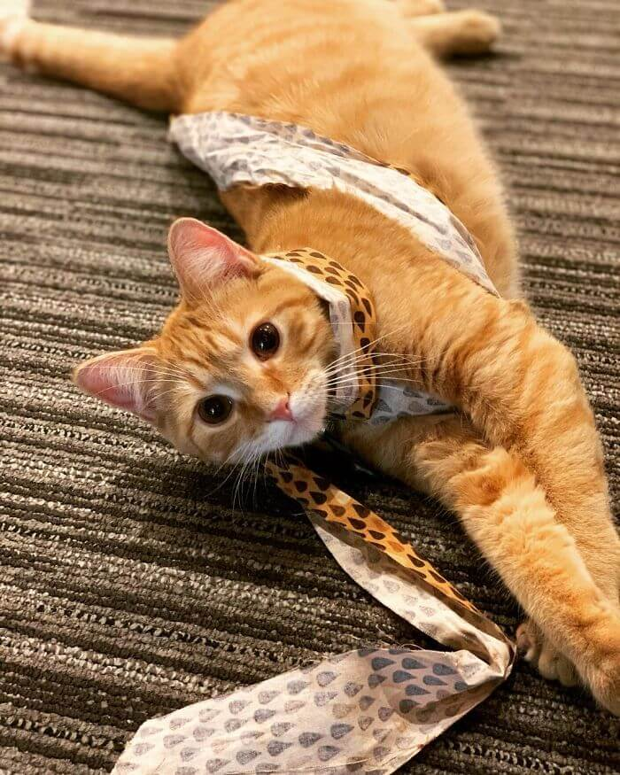 Company Adopted Two Office Kittens, Debit And Credit, To Boost Employee Morale