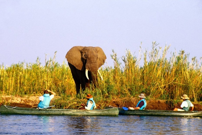 Elephant and canoes