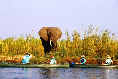 Elephant and canoes