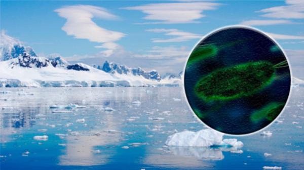Encuentra una forma de vida desconocida en la Antártida