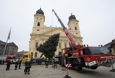 Idén magasabb lesz Debrecen karácsonyfája – hamarosan felállítják