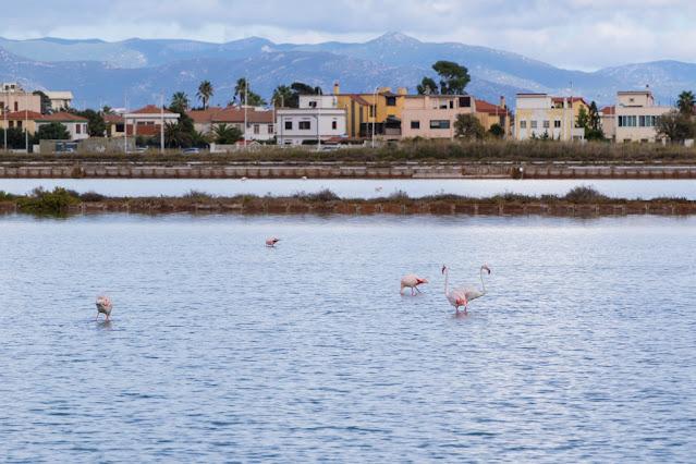 Fenicotteri rosa al Parco naturale Molentargius-Saline a Cagliari
