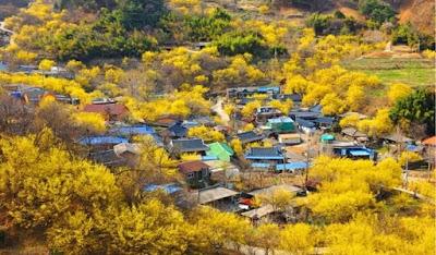 Desa Sangai