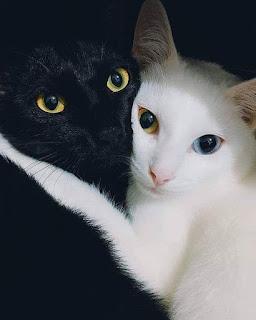 Foto kucing hitam lucu