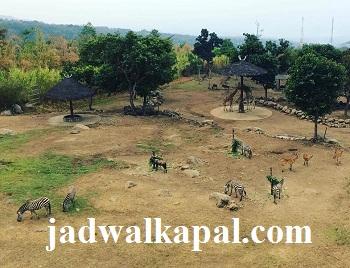 Harga Tiket Masuk Taman Safari Prigen 2018