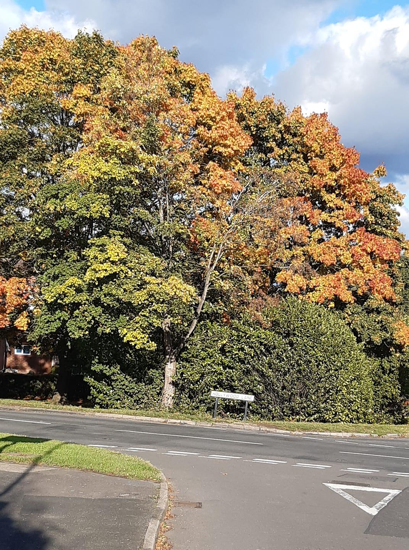 tree on road
