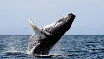 حقيقة سماع صوت الحوت الازرق على سواحل البحر المتوسط