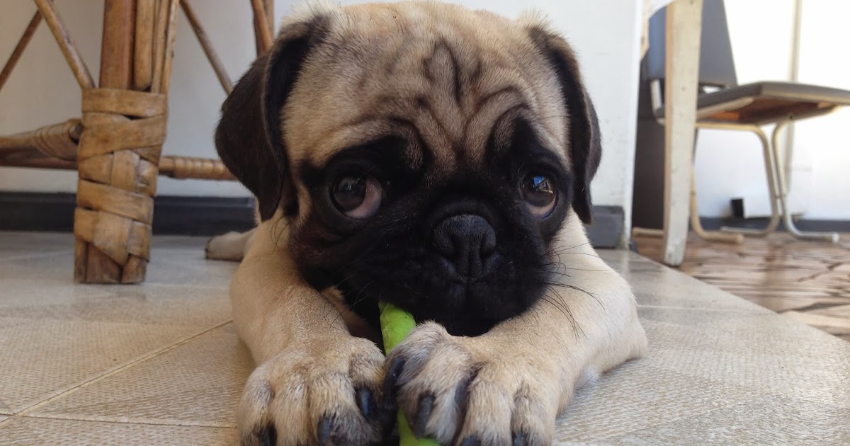 Mrs Meggins Really Cute Puppy Dog Pictures Blog Videos