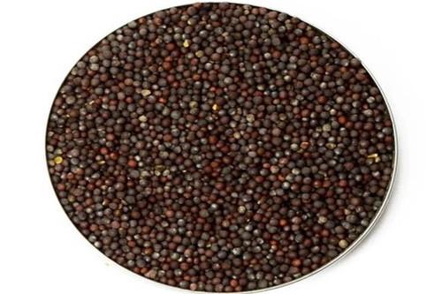 Mustard Seeds - राई / सरसों