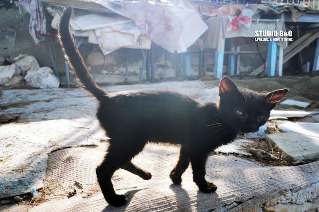 Παγκόσμια Ημέρα των Ζώων: Η σχέση του ανθρώπου με τα ζώα είναι υπόθεση ηθικής