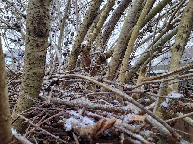 A close up of a medium sized bare tree with small amount if white snow on the branches.
