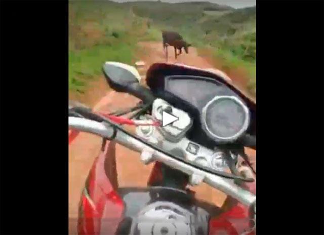 https://www.calangodocerrado.net/2019/06/empinou-a-moto-filmou-e.html
