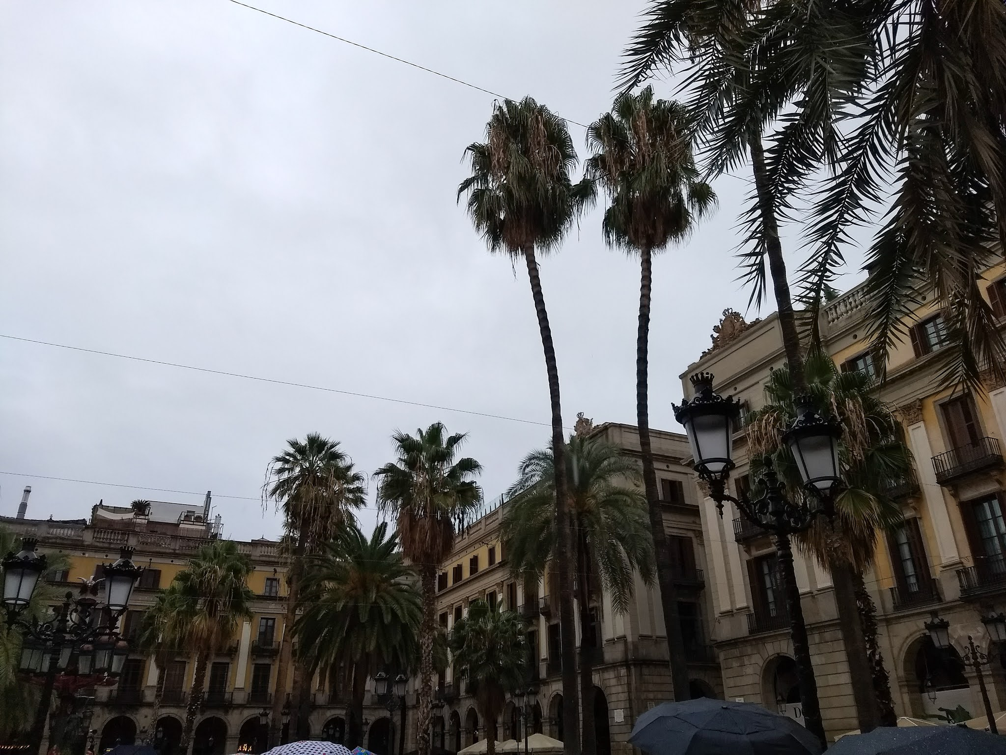 Palm trees and buildings on the Plaça Reial square in the Barri Gòtic of Barcelona, Catalonia, Spain.