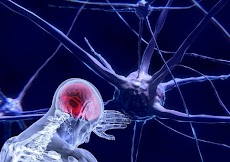 Neurons in The Brain - Long and Short Term Memory