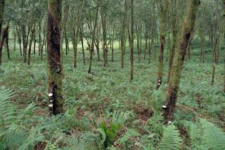 andaman-nicobar-plantation-development-corporation-to-be-closed