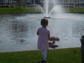 Pond at Haven's Wild Duck Park