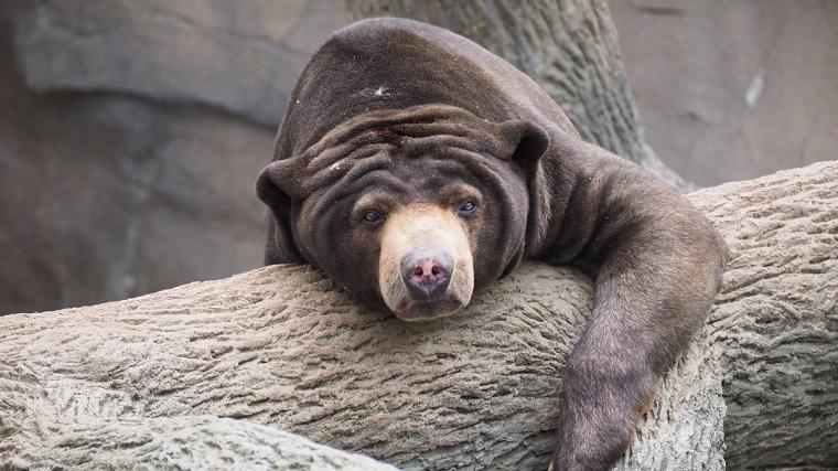 Kiếp sau tôi muốn làm một con gấu