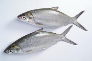 معنى شراء السمك الحي في الحلم