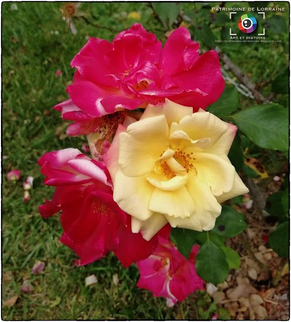 NANCY (54) - Roseraie du Parc de la Pépinière