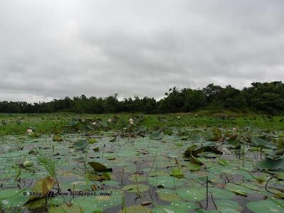 Poddo Beel of Ghagutia, Brahmanbaria