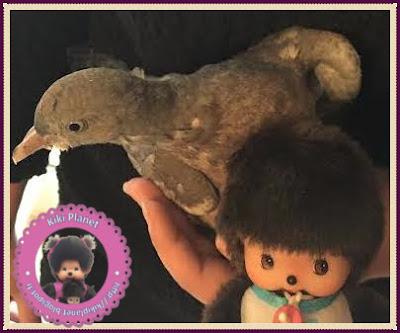 Baby le Bebichhichi et Colombine le bébé pigeon - pigeon - pigeonneau -oisillon