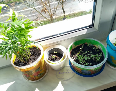 Adzik tworzy - diy ogródek z ziołami i warzywami na parapecie