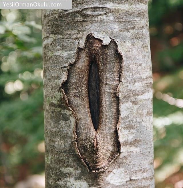 Ağaçlarda Budama ve Ağaç Cerrahisi