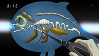 Puffer Fish Anatomy, animated