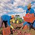 « NOURRIR L'AFRIQUE » : UNE STRATÉGIE DE LA BAD POUR LUTTER CONTRE LA PAUVRETÉ