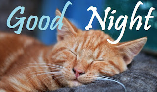 good night images with cute animals