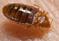 knoxville pest control, bed bugs