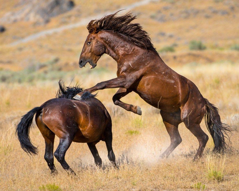 خلفيات خيول HD