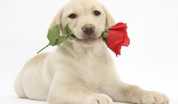 Happy Valentines Day download besplatne pozadine za desktop 1680x1050 slike ecards čestitke Valentinovo