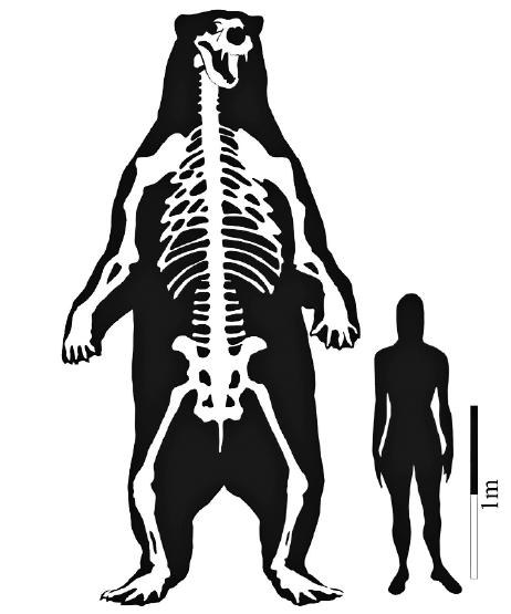 Extinct Animal of the Week: Anatomy of the Bear