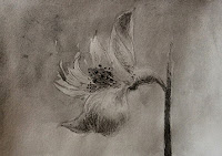 water soluble graphite/pencil painting of a flower by Manju Panchal