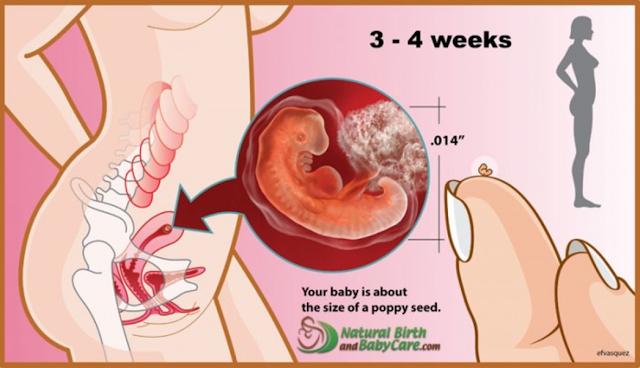 Nikah Baru 2 minggu, Tapi Usia Kehamilan Udah 1 Bulan. Kok Bisa? Jangan Suudzon Dulu, Karena Itu Normal. Begini Penjelasannya...