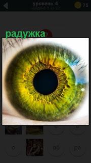 желто зеленая радужка глаза на лице человека