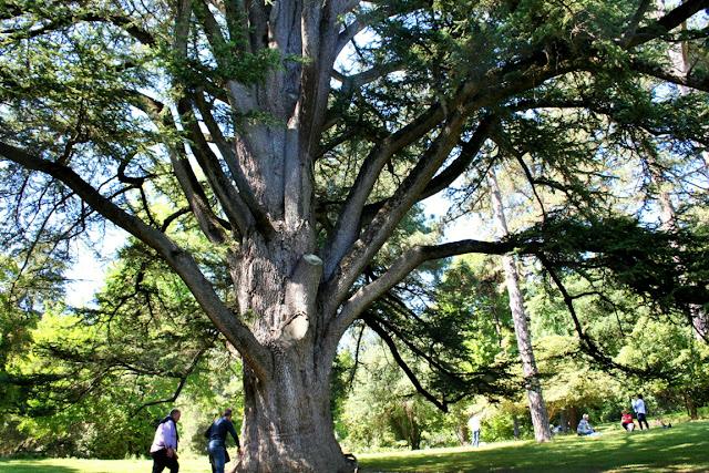 albero, giardino, prato inglese
