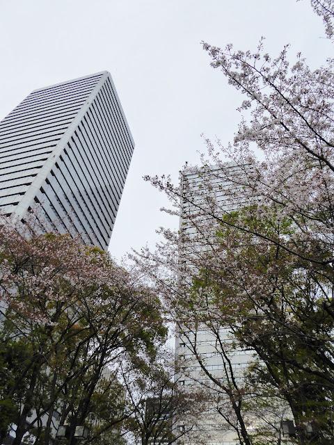 ツイン21周辺の桜