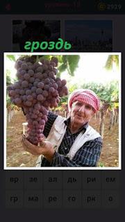 женщина держит большую гроздь винограда которую вырастила сама
