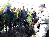 <b>Jajaran Pemkab Bima Tanam Pohon di Batas Kota dan Kantor Bupati Bima</b>