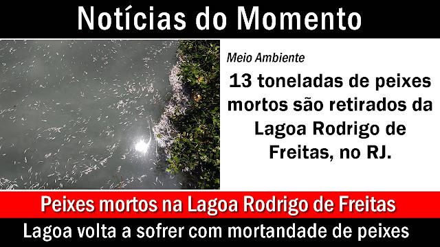 13,6 toneladas de peixes mortos são retirados da Lagoa Rodrigo de Freitas