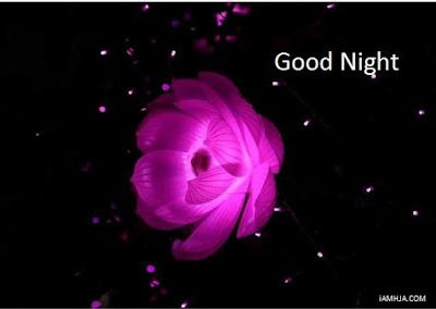Good Night Images with pink rose