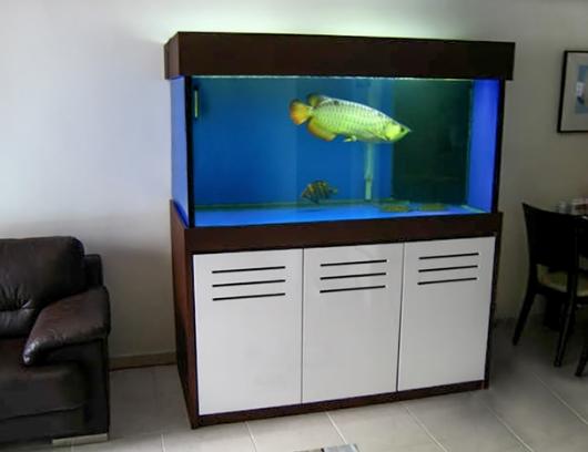 Chuyển hồ cá gia đình