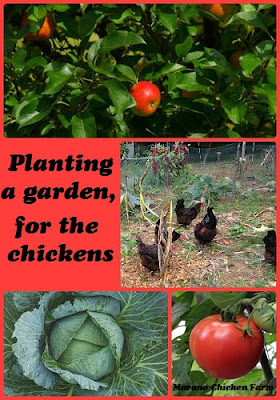 Gardening for chickens