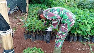 Oftimalisasi Bibit Tanaman, Subsektor Pembibitan Sektor 22 Persiapkan Tanaman Subur dan Sehat